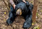 Bear2020-06