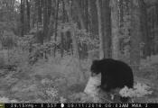 bear2016-4