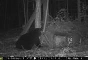 bear2016-2